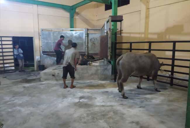 RPH Pasir Pangaraian Sudah Difungsikan, Masih Ada Pemilik TPH Tanpa Izin