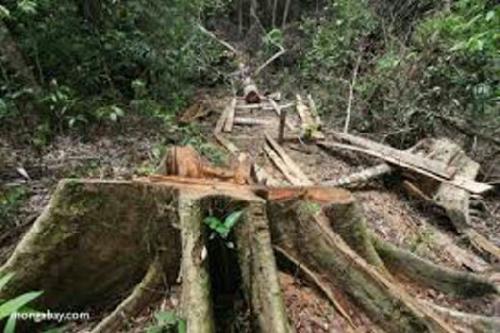 Gara-gara Lakukan Hal Ini di Kawasan TNBT, Dua Warga Batang Gangsal Inhu Dikerangkeng