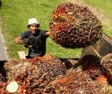 Penjualan CPO Riau Terpengaruh Anjloknya Harga Minyak Kedelai Dunia