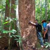 Kawasan Hutan Lindung Bukit Tabandang Terancam Punah