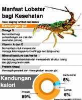 Kiara Soal Ekspor Lobster : Perhatikan Aspek Lain yang Esensial