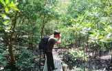 Hutan Bakau di Dumai Terancam Punah