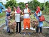 Direktur Perlindungan Tanaman Pangan dan Holtikultura Kementerian Pertanian Tinjau P4S