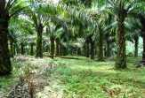 PT Safari Riau Kena Ancam Demo