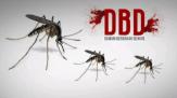 Sampai Oktober 2016, Terjadi 83 Kasus DBD di Kabupaten Pelalawan