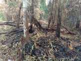 Diguyur Hujan Lebat, Kebakaran di Ketamputih Mulai Meredup